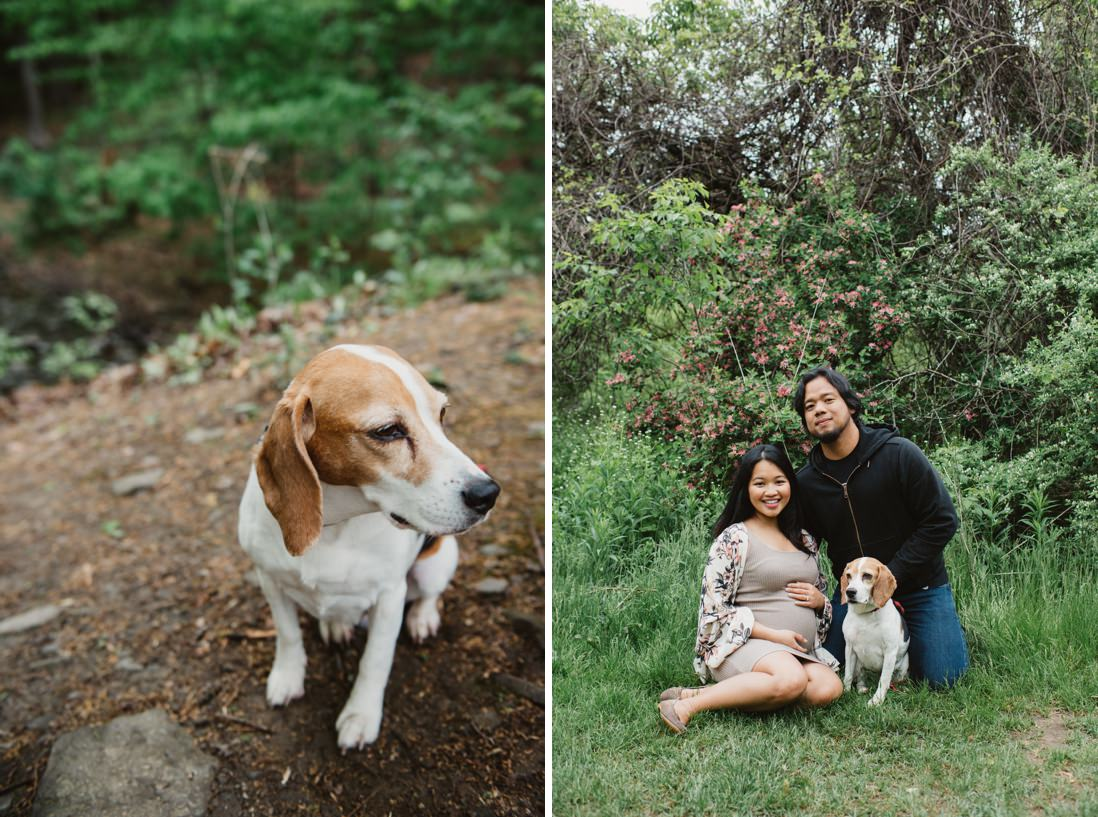 Mississauga Maternity portrait with pet dog | Riverwood Conservancy | EightyFifth Street Photography