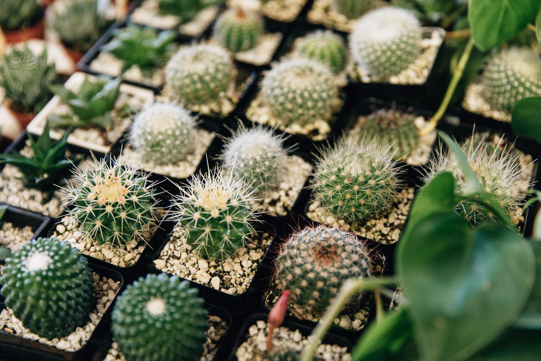 Close of detail of cacti display | Kensington Market Engagement, Toronto | EightyFifth Street Photography